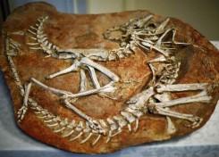 140710-dinosaur-bones-jms-2333_2b56e59c017fdafdf7a03eca4c57a25d.nbcnews-ux-960-700
